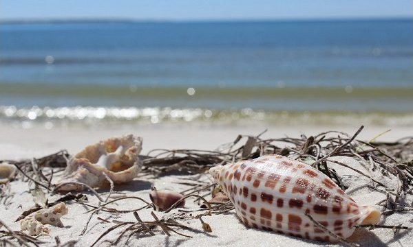 Family Summer Vacation Planning Gulf County Adventure