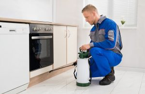 Fail Proof Ways to Find the Best Pest Control Company for Your Home