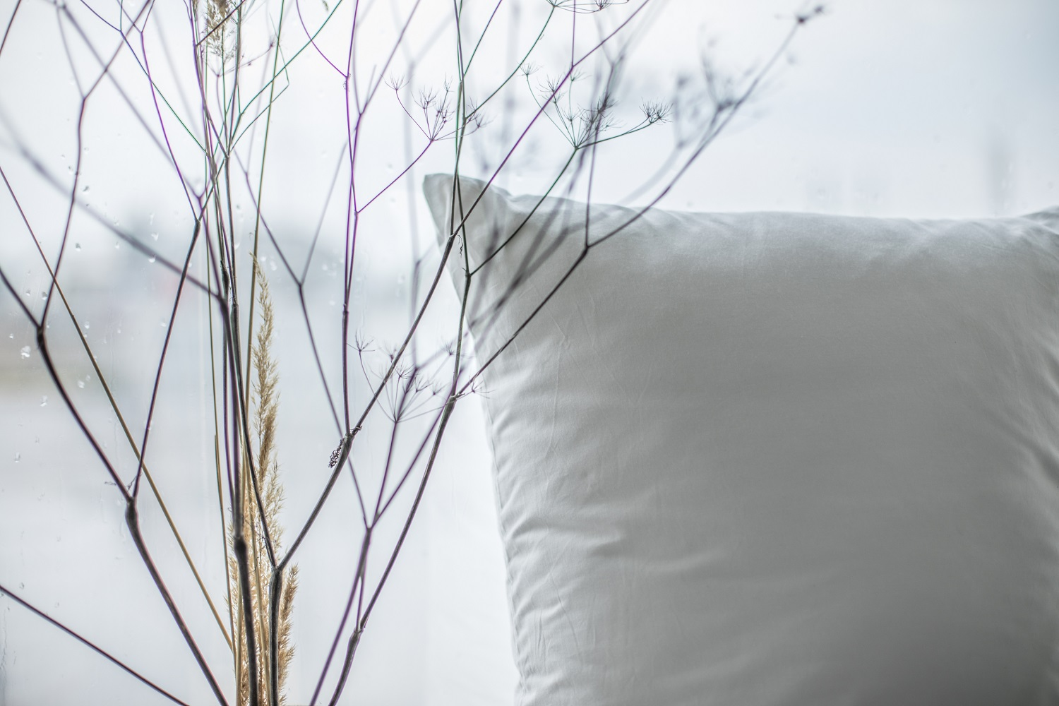 Best Bedroom Plants for Cleaner Air